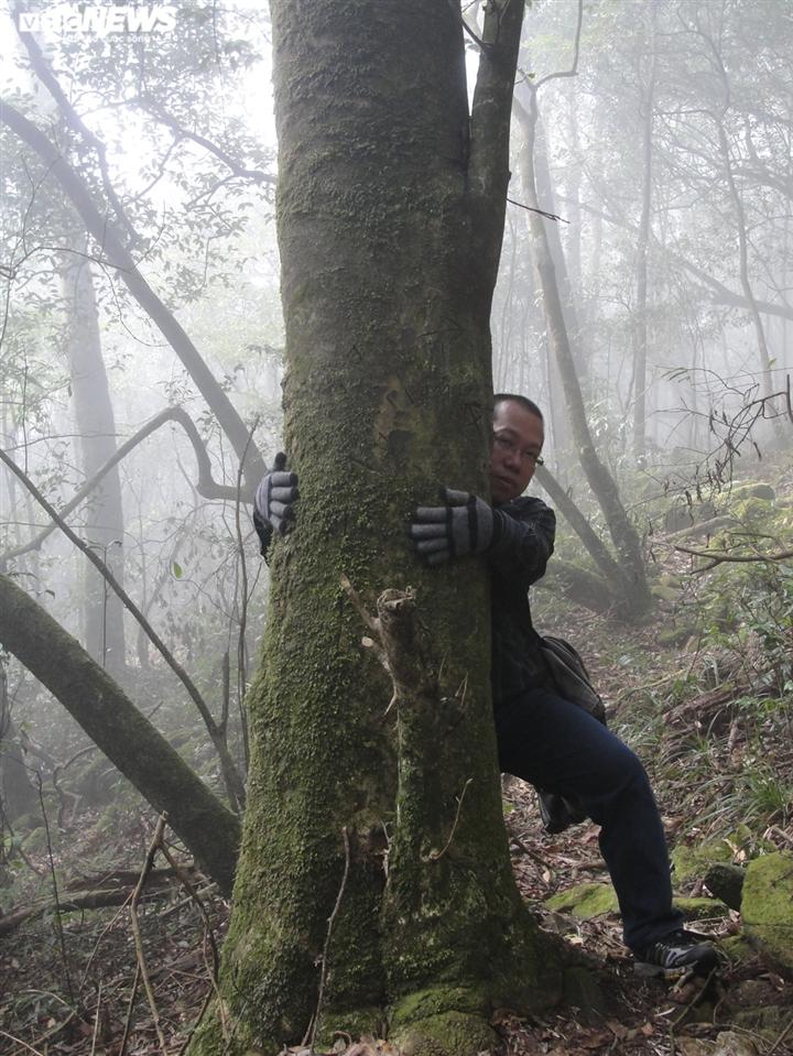 Bí ẩn từ những rừng chè shan tuyết ngàn năm tuổi trên đỉnh Fansipan - 3