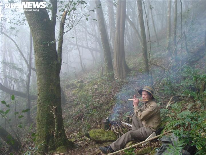 Bí ẩn từ những rừng chè shan tuyết ngàn năm tuổi trên đỉnh Fansipan - 8