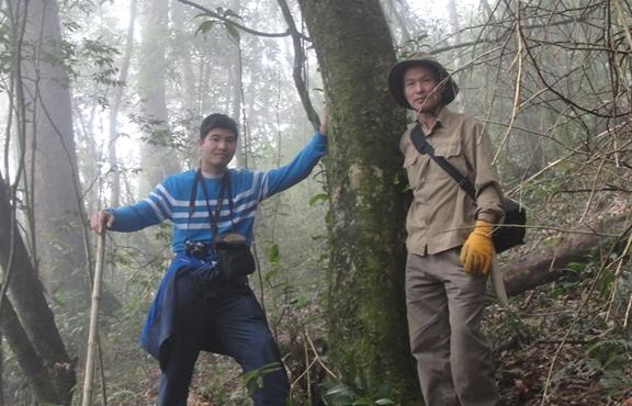 Bí ẩn từ những rừng chè shan tuyết ngàn năm tuổi trên đỉnh Fansipan