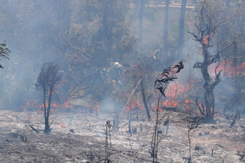 Liên tiếp xảy ra nhiều vụ cháy rừng tại Huế  -1