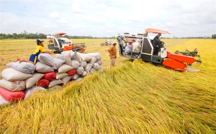 Hà Nội gửi tặng TP.HCM và Bình Dương 6.000 tấn gạo