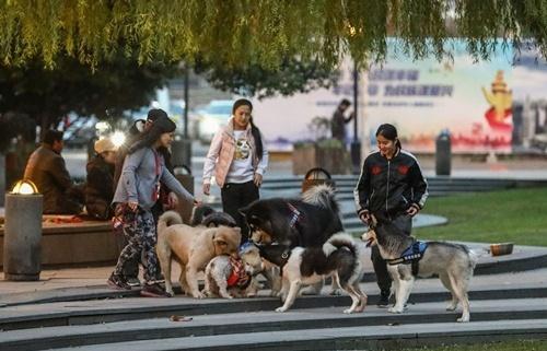 Chính quyền Bắc Kinh cấm dắt chó đi dạo ở công viên