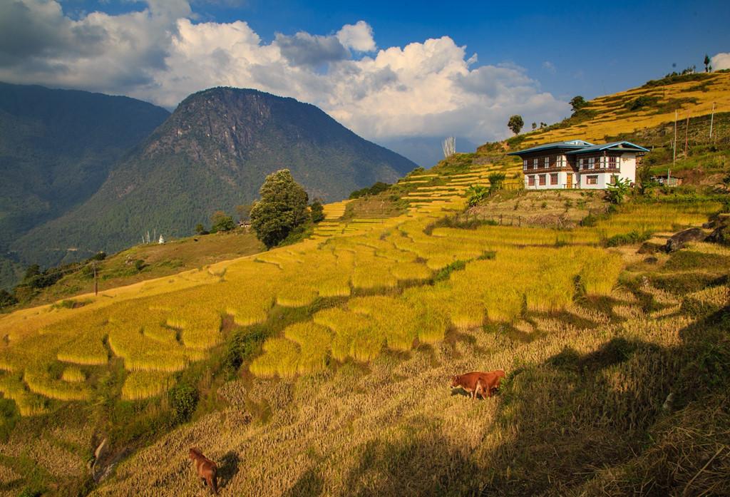 mytour hanh trinh 5 nam dat chan kham pha bhutan