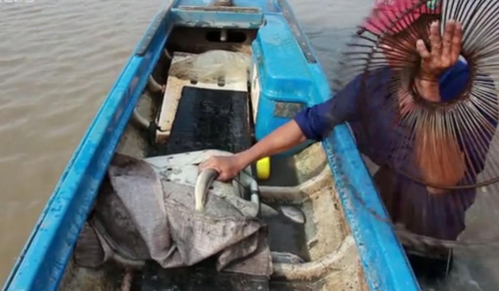 Kéo côn bắt cá lóc đồng mùa lũ ở Đồng Tháp Mười
