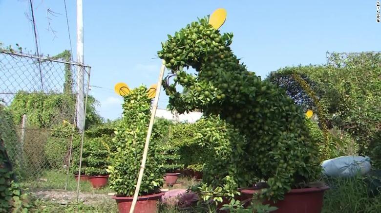 Quất bonsai hình con chuột có giá lên đến 5 triệu đồng. Ảnh: CNN/VTV