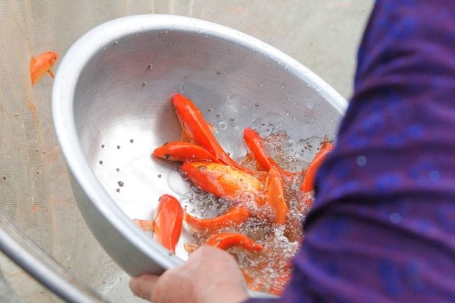 Trong ngày 23 tháng Chạp người dân thường thực hiện thả cá chép.