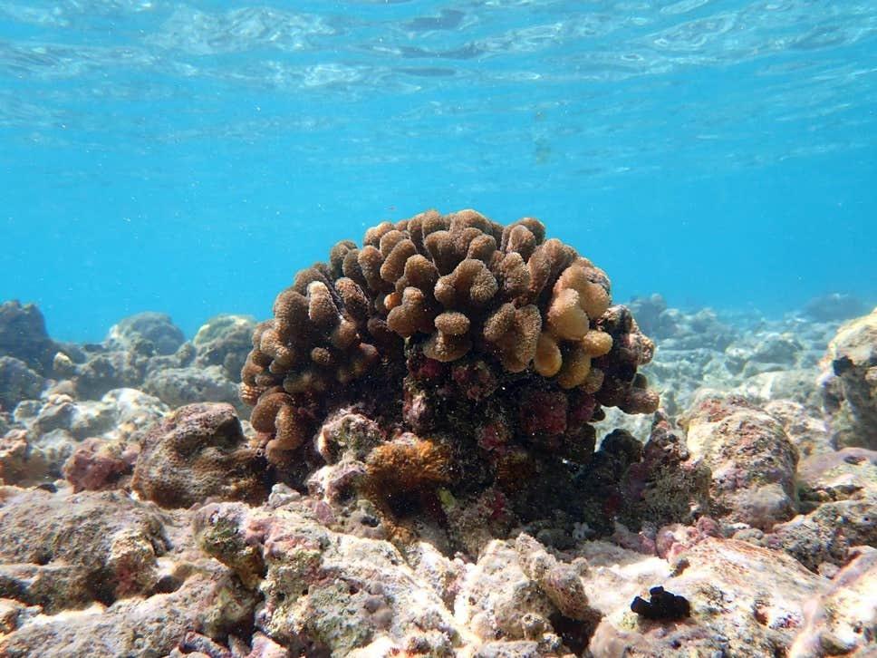 Nhiệt độ ở đại dương tăng 0,075 độ C, cao hơn mức trung bình kể từ năm 1981 đến năm 2010. Ảnh: Getty