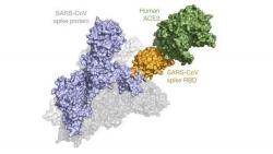 Phương pháp sàng lọc mới phát hiện khả năng lây nhiễm nCoV