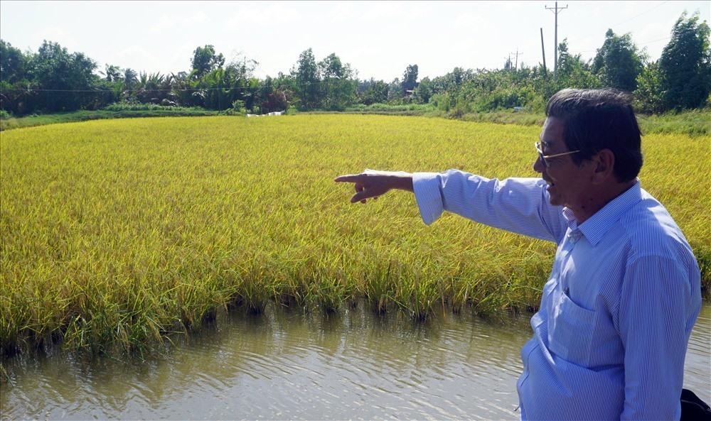 Kỹ sư Hồ Quang Cua bên cánh đồng lúa - tôm, lúa sạch dòng ST24. Ảnh Nhật Hồ
