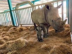 Vinpearl Safari Phú Quốc - 17 ngày đón 2 cá thể tê giác quý chào đời