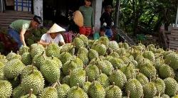 mot dong thai tu trung quoc hang loat the manh viet nam dieu dung