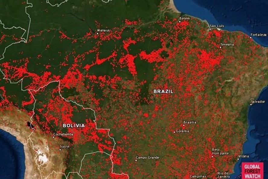 Bản đồ cho thấy vị trí của tất cả các vụ cháy rừng tại Brazil từ ngày 13.8. Ảnh: Global Forest Watch.