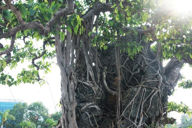 Chiêm ngưỡng sanh cổ 'Mộc thạch nghênh phong', đại gia đổi 8 lô đất Hà Nội không bán - Ảnh 4