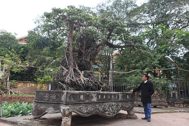 Chiêm ngưỡng sanh cổ 'Mộc thạch nghênh phong', đại gia đổi 8 lô đất Hà Nội không bán - Ảnh 8