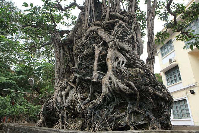 Chiêm ngưỡng sanh cổ 'Mộc thạch nghênh phong', đại gia đổi 8 lô đất Hà Nội không bán - Ảnh 11