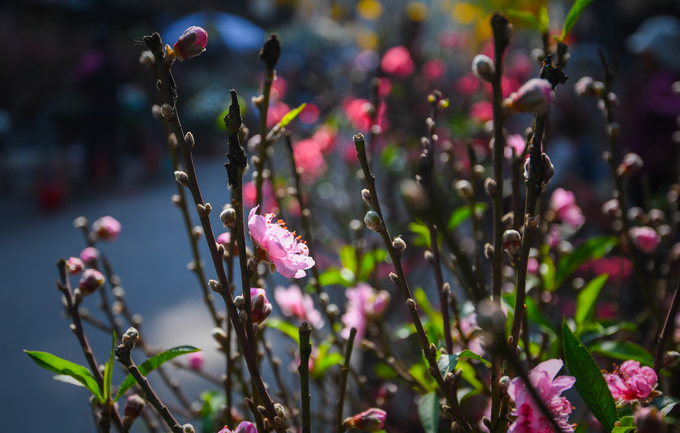 ghe cho hoa ha noi chi hop mot lan trong nam vao dip tet