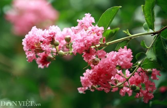 anh khu vuon 100 goc hoa tuong vi dep lung linh o ha noi