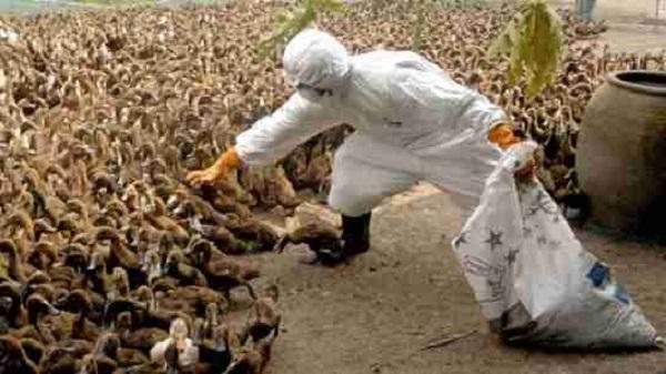 Phát hiện những người đầu tiên trên thế giới nhiễm virus cúm gia cầm H5N8 - Ảnh 1