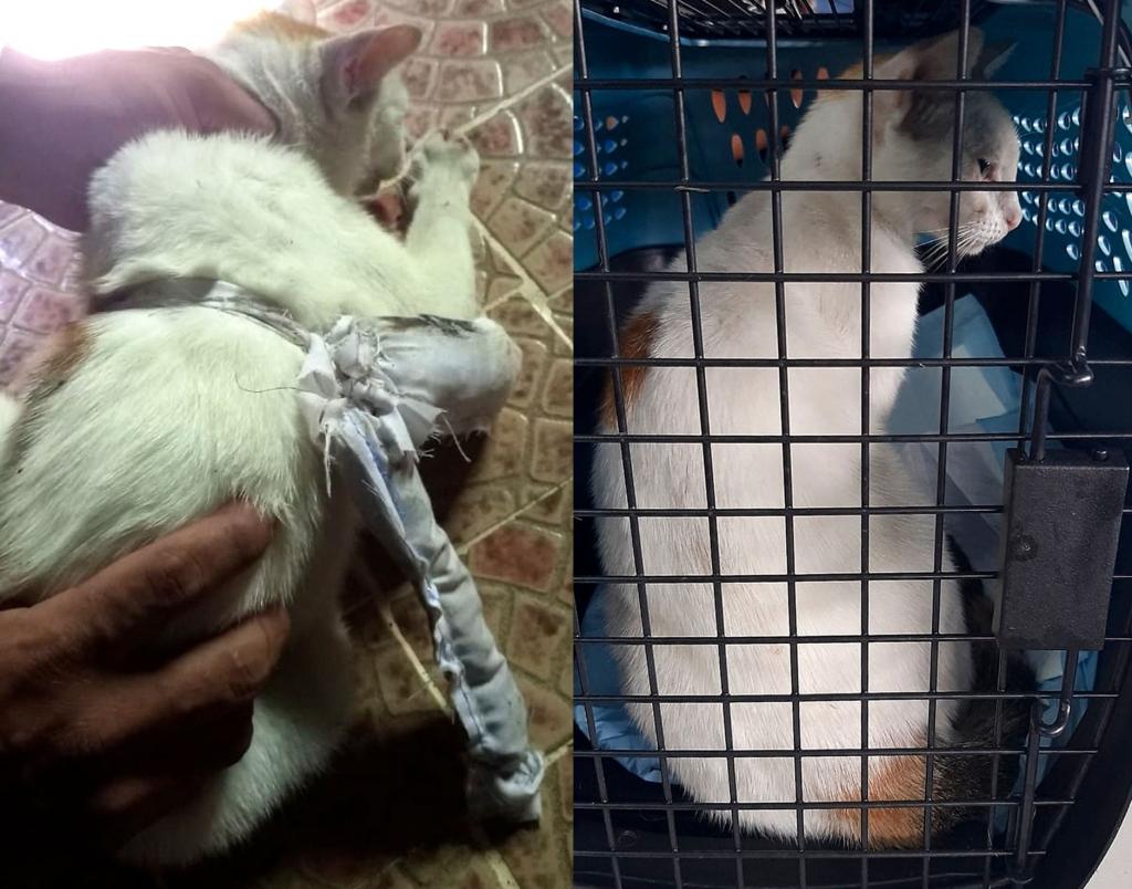Dùng mèo vận chuyển ma túy