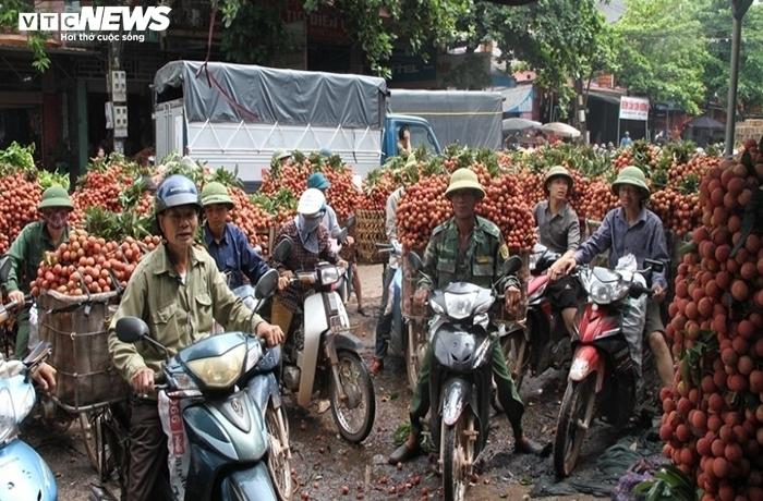 Vùng vải 12.000 tấn 'không COVID-19' ở Bắc Giang - 1
