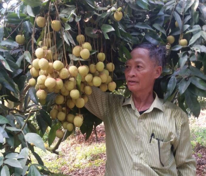 Đưa nông sản lên chợ online