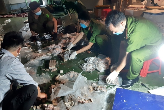 Triệt phá ổ nhóm giấu ma túy vào dạ dày lợn, gắn định vị để chuyển ra nước ngoài