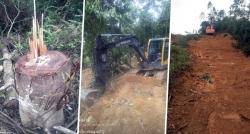 Vĩnh Phúc: Công an vào cuộc vụ rừng giao cho chủ tịch xã bị chặt phá