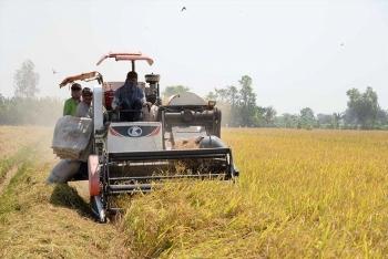 Việt Nam đang trở lại vị trí xuất khẩu gạo số 1 thế giới