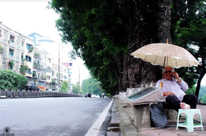 Tiếc nhớ hàng xà cừ cổ thụ trên đường Kim Mã - 6