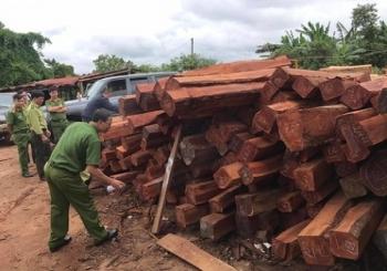 Gia Lai: Bắt giam đối tượng mua gỗ lậu
