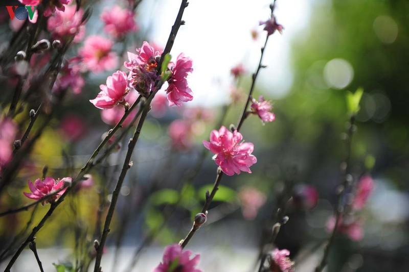 ruc ro duong hoa ven song huong