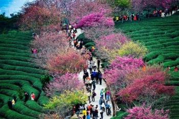 Ngày đầu năm mới 2021, ngắm vẻ đẹp choáng ngợp của hoa xuân trên khắp thế giới