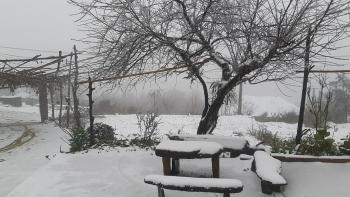 Y Tý trắng tuyết