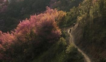 Chính phủ ủng hộ đề xuất dán tem phân biệt đào rừng