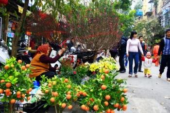 Hà Nội có 89 điểm chợ hoa xuân phục vụ Tết Tân Sửu 2021