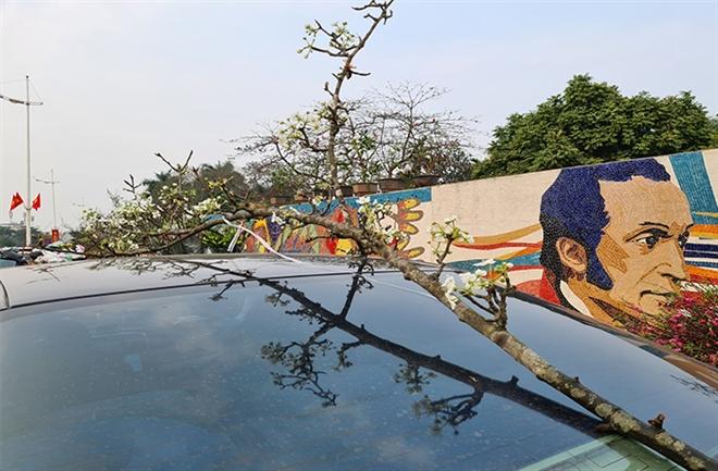 Đào, quất tàn sau Tết, đến lượt lê rừng tiền triệu hút khách Hà Nội - 7