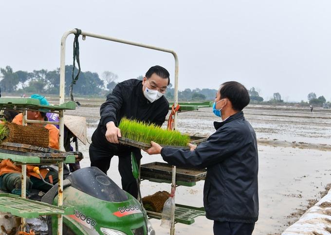 Bí thư, Chủ tịch Hà Nội xuống đồng cấy lúa