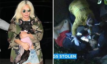 Kẻ trộm bắt chó của Lady Gaga, bắn trọng thương người giúp việc