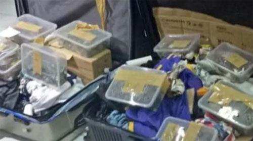 khach di may bay giau 1500 con rua trong vali
