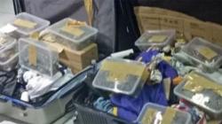 Khách đi máy bay giấu 1.500 con rùa trong vali