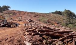 Chủ tịch xã nhận 350 triệu đồng để 'lâm tặc' hạ rừng