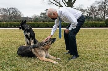 """Chó cưng của Biden bị """"trừng phạt"""" vì cắn mật vụ"""