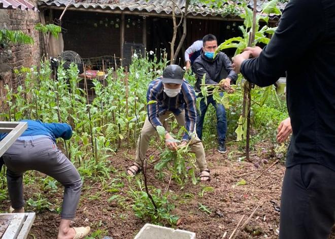 Hà Nội: Xử lý nghiêm vụ trồng gần 400 cây anh túc để… ngâm rượu ảnh 2
