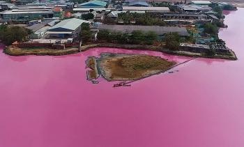 Công ty cạnh hồ nước màu hồng tím bị phạt 372 triệu đồng