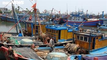Bị tàu Trung Quốc xua đuổi, cướp bóc, ngư dân vẫn can trường bám đảo Hoàng Sa