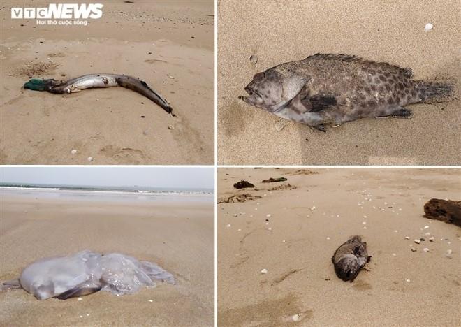 Cá chết ở biển Nghi Thiết, Nghệ An: Kết quả phân tích chất lượng nước biển - 1