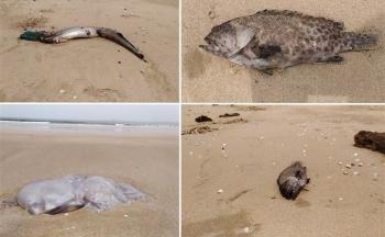 Cá chết ở biển Nghi Thiết, Nghệ An: Kết quả phân tích chất lượng nước biển