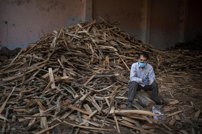 Ấn Độ chặt cây trong công viên, lấy củi hoả táng bệnh nhân COVID-19 - 7