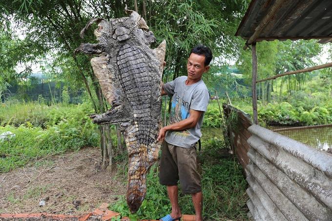 Bắt nhiều cá sấu dưới kênh ven Sài Gòn