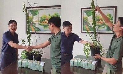 Đại gia Hà Tĩnh chi 3,5 tỷ mua 2 chậu lan: 'Cơn sốt' săn lan hiếm hay chiêu trò 'thổi giá'?